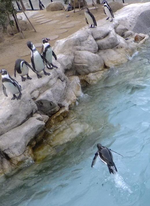 ペンギンの空中ダイヴ