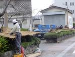 秋田では雪囲い作業が急がれていた