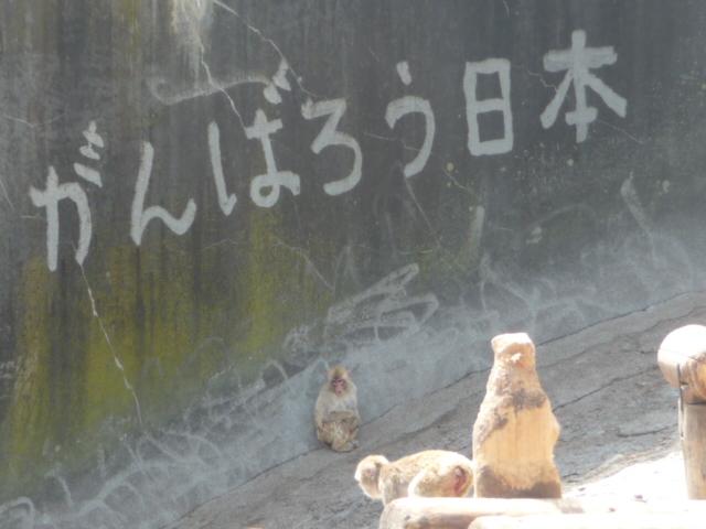猿山の壁に書かれたメッセージ