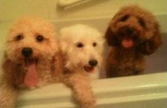 ご機嫌でお風呂