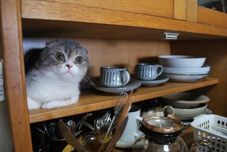 食器棚きなこ
