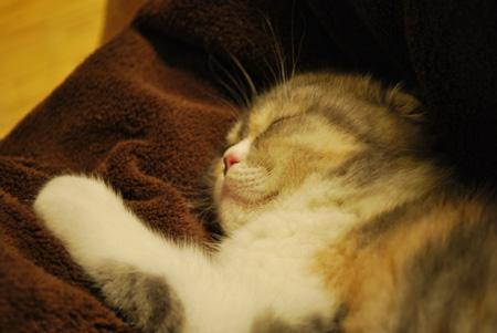 おやすみきなこ