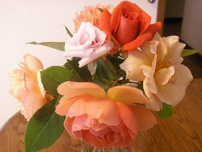 薔薇さんたち