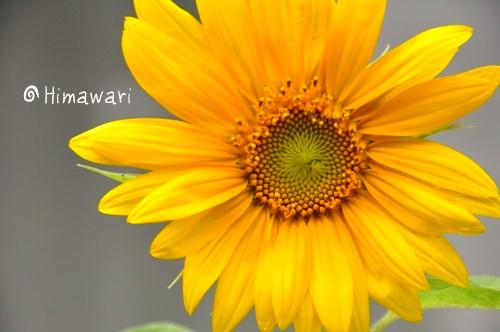 010_picnik_20090701125534.jpg