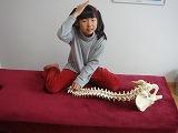 説明-兵庫県伊丹市カイロプラクティック整体