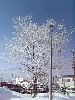 樹霜(じゅそう)