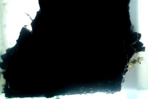 IMG_0895kkkkf.jpg