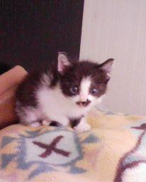 2008-06-12 chappy