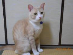 繝ヲ繧ヲ繧ソ11_convert_20100817230516y
