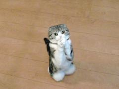 お祈り子猫_convert_20110127222852