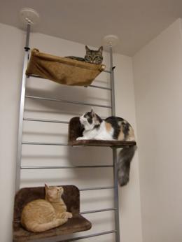 cat001_convert_20091208223953.jpg