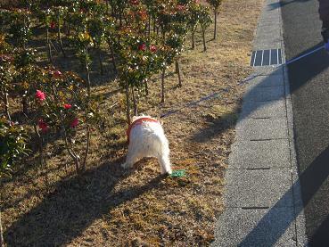 画像 012 いわき公園1