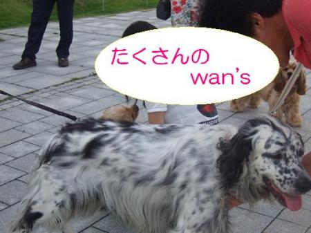 pan+009_convert_20080907234117.jpg