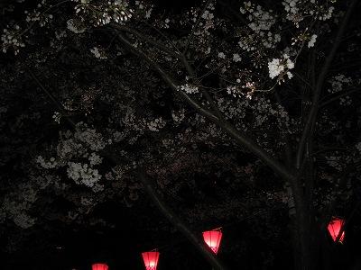 s-夜桜9