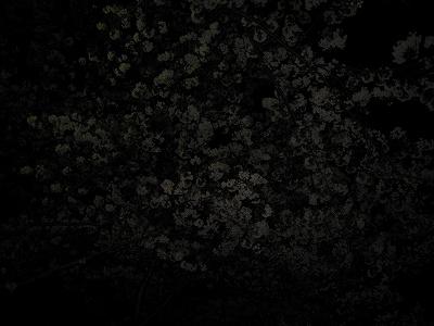 s-夜桜10