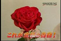 roseday080114-03.jpg
