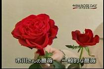 roseday080114-04.jpg