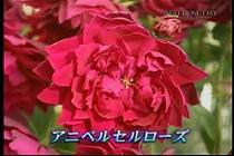 roseday080114-06.jpg