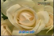 roseday080114-07.jpg