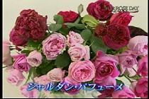 roseday080114-08.jpg