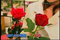 roseday080114-12.jpg