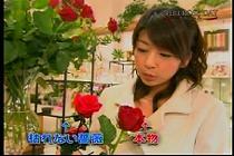 roseday080114-13.jpg