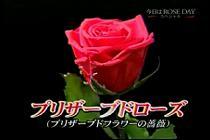 roseday080114-14.jpg