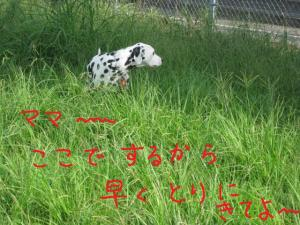 IMG_223001.jpg