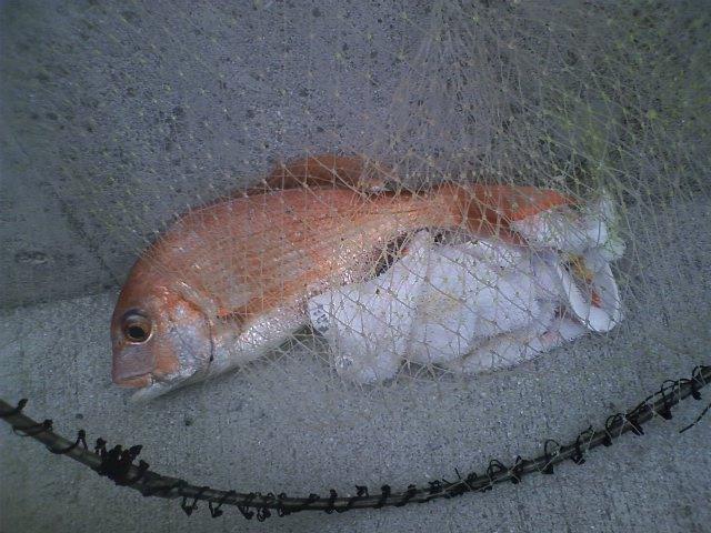 釣果(20080915)