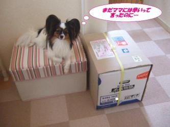 03-02_20090804193609.jpg