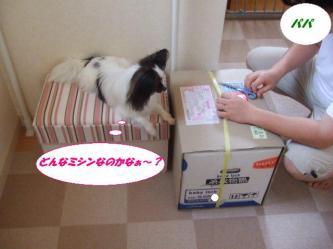 03-03_20090804193616.jpg
