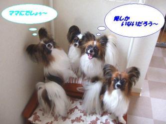 04-01_20090517184947.jpg