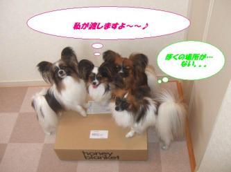 04-02_20090517184955.jpg