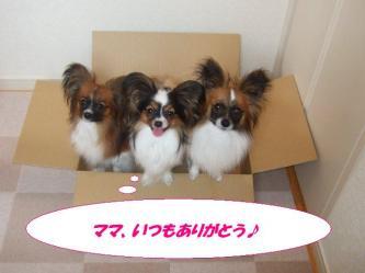 04-03_20090517185003.jpg
