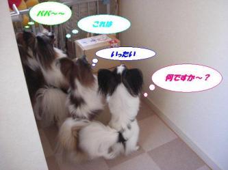 05-01_20090909135244.jpg