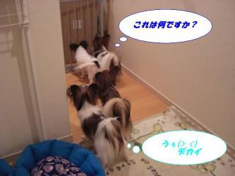 05-03_20081006222505.jpg