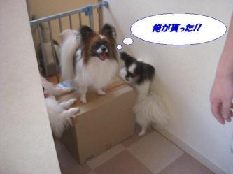 05-04_20090909135311.jpg
