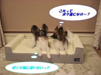 05-06_20081006222548.jpg