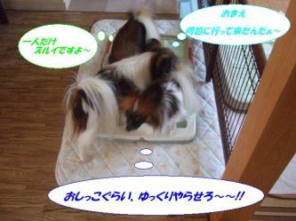 05-06_20090206185150.jpg