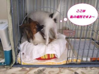 09-01_20081009123120.jpg