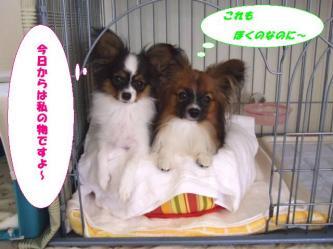 09-03_20081009123256.jpg