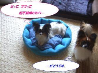 09-04_20090409185950.jpg