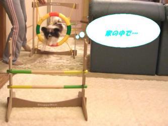 10-10_20090113094950.jpg