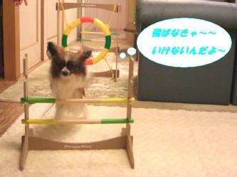10-11_20090113094959.jpg
