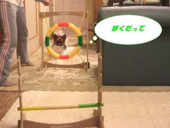 10-12_20090113095006.jpg
