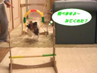 10-13_20090113095014.jpg
