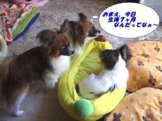 10-19_20090113095102.jpg