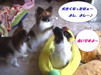 10-20_20090113095114.jpg