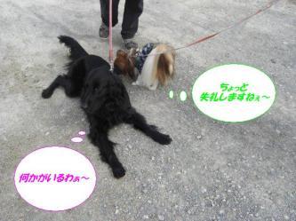 12-01_20090325131430.jpg