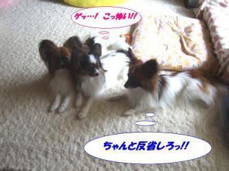 12-07_20090614201022.jpg
